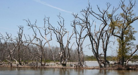 Rising sea levels could accelerate Florida Bay mangrove loss