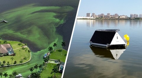 Florida and LG Sonic exploring cooperation algal problems