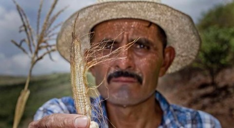 FAO and WFP request US$72 million to provide food assistance in Central America