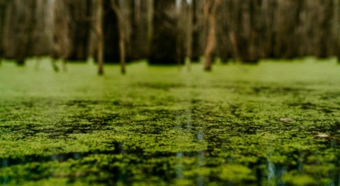 Green and clean: new eco-friendly and sustainable algae-based way to fight water pollution