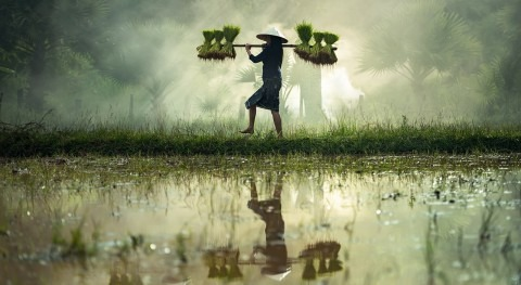 Protecting the world's wetlands: 5 essential reads