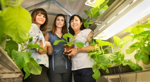 Helping tobacco plants save water