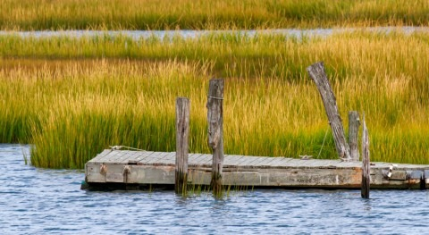 New Jersey's tidal marshes in danger of disappearing, study shows