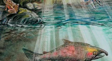 Hidden world of stream biodiversity revealed through water sampling for environmental DNA