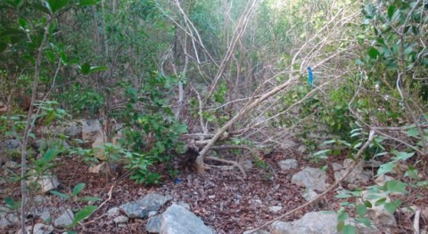 Hurricane Maria permits study of how tropical dry forests recover from extreme weather events