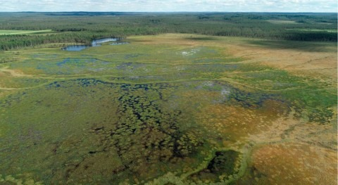 Hydrology of undrained peatlands is often affected by drainage of surrounding areas
