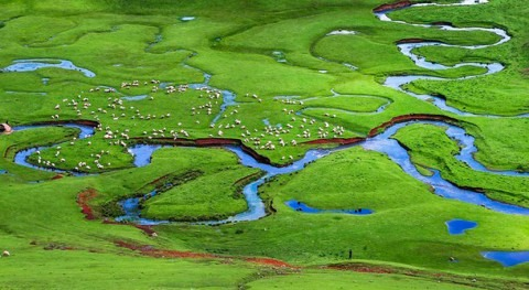 Recovering floodplains would improve state of water and ecosystems in Europe