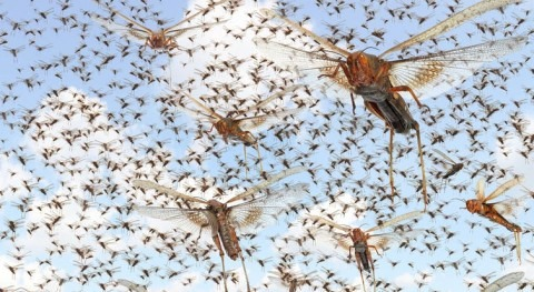 What warmer, wetter world means for insects, and for what theyeat