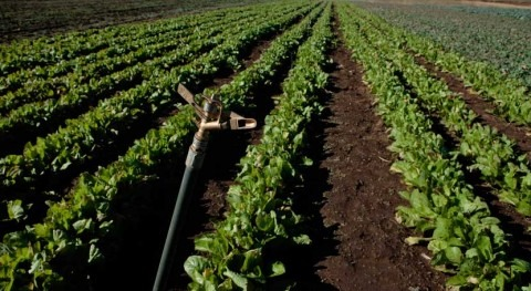 Irrigation in Turkey to be modernized with World Bank financing
