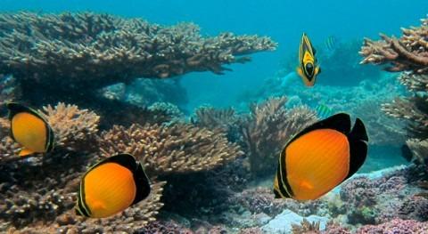 United Arab Emirates designates Jabal Ali Wetland Sanctuary