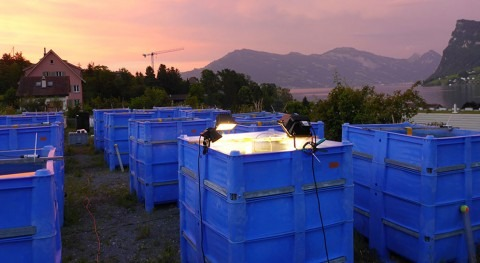 Researcher documents cascading effects of parasites on underwater ecosystems