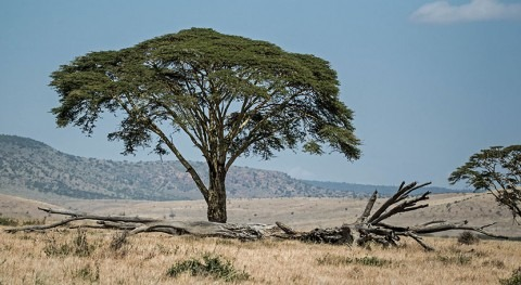 Green Climate Fund $34 million project will address drought impacts in Kenya