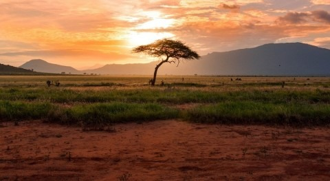 Over 2 million people in Kenya face acute hunger due to drought, warns IRC