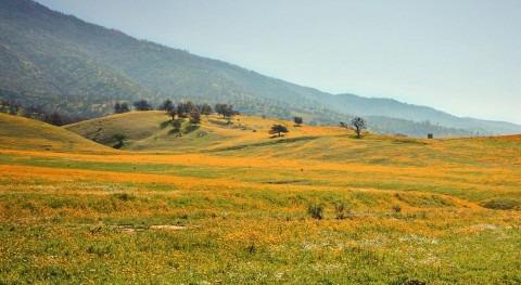 Oilfield activities have increased groundwater salinity in western Kern County in California
