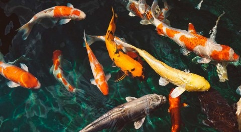 Antidepressants polluting the water can change fish behavior