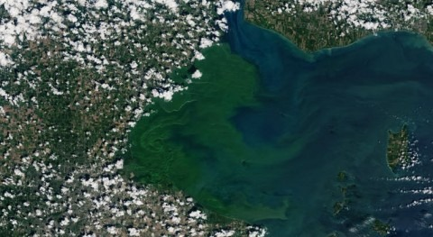 Reservoir management could help prevent toxic algal blooms in Great Lakes
