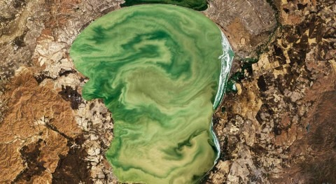 Lakes worldwide are experiencing more-severe algal blooms