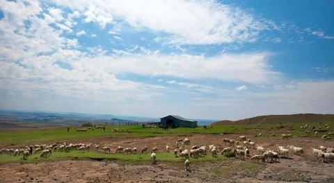 Daylight not rain most important for Africa 'green-up' phenomenon