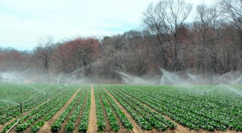 Produce Safety Alliance aims to demystify complex agriculture water rules