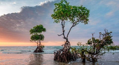 Device mimics the mangrove's water-purifying power