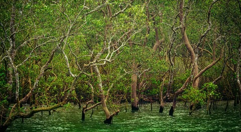Global investment in mangrove regeneration could return $11.8 billion by 2040, says new report