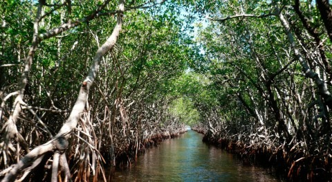 Mangroves threatened by plastic pollution from rivers, new study finds