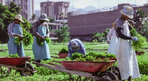 UH, watercress farm conduct sustainability research