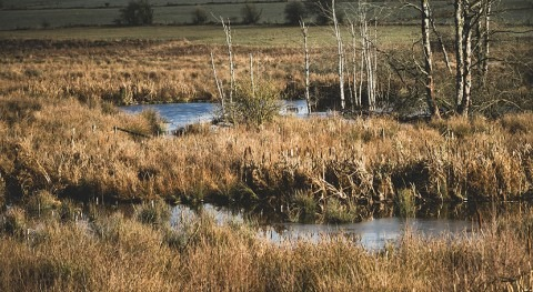 Restoring wetlands near farms would dramatically reduce water pollution