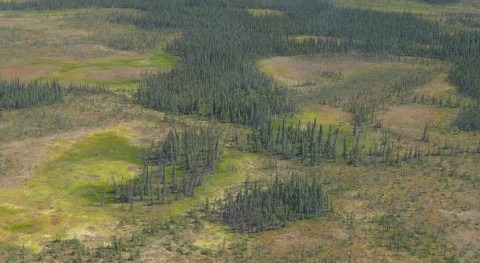 Accelerated water loss in northern peatlands threatens to intensify fires and global warming