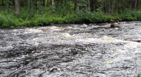 Finnish rivers transport carbon to the Baltic Sea at an increasing rate