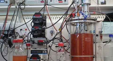 Microbes can grow on nitric oxide