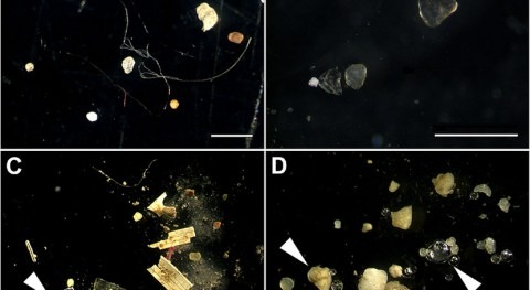 Detecting microplastics first step in assessing environmental harm