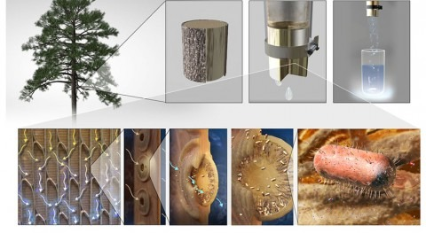 Engineers make filters from tree branches to purify drinking water