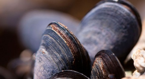 Mussels are inspiring new technology that could help purify water and clean up oil spills