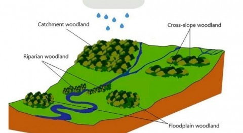 What role do forests play for natural flood management in the UK?