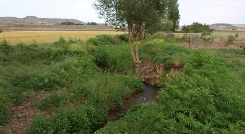 study warns about the ecological impact caused by sediment accumulation in river courses