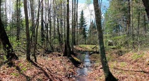 Nitrogen pollution's path to streams weaves through more forests than suspected