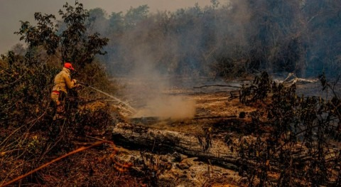 Researchers identify the causes of the extreme drought that affected the Pantanal