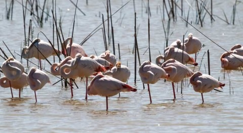 Brussels takes Spain to Court for failure to protect the Doñana Wetlands