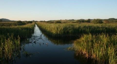 Better peatland management could cut half billion tonnes of carbon
