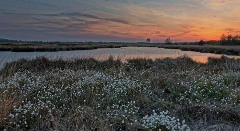Scottish Government commits £11 million to restore Scotland's peatland areas
