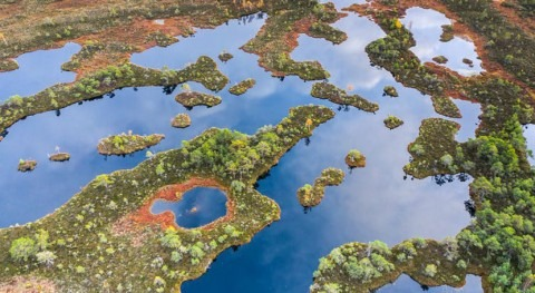 Peatlands worldwide are drying out, threatening to release 860 million tonnes of CO2 every year
