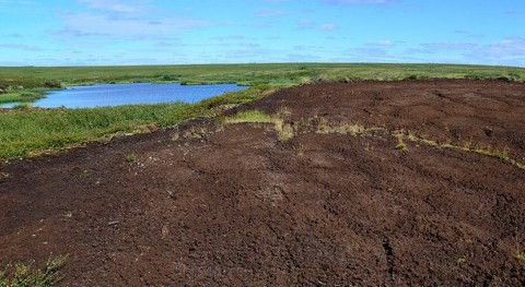 Historical climate effects of permafrost peatland surprise researchers