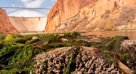Low-flow research on Colorado River sheds light on eventual new normal for Grand Canyon