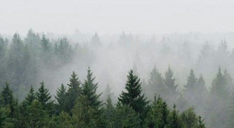Reforesting Europe would increase rainfall – newresearch