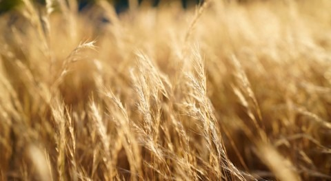 Intensified droughts will affect nitrogen emissions in rainfed agriculture