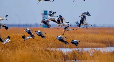 Seven new Wetlands of International Importance for China