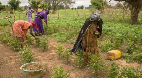 Reducing disaster risks in agriculture is win-win for small-scale farmers