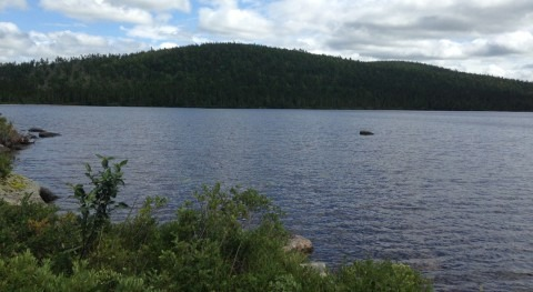 New study shows legacy of DDT in lake ecosystems