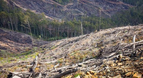 Researchers allege native logging breaches that threaten the water we drink